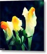 Wild Yellow Flowers On Dark Background Metal Print