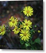 Wild Yellow Flowers Metal Print