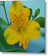 Wild Yellow Lilly Metal Print