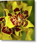 Wildcat Doris Orchid Metal Print