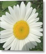 Wilddaisy Metal Print