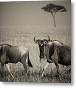 Wildebeest 8947b Metal Print