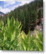 Wilderness Expedition Metal Print