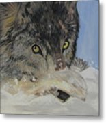 Wildeyes In The Snow Metal Print