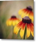 Wildfire Wildflowers  Metal Print