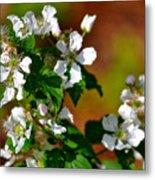 Wildflower 4 Metal Print