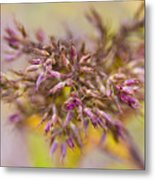 Wildflower Abstract Metal Print