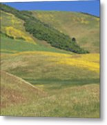Wildflower Display - Salisbury Potrero Metal Print