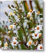 Wildflower,  Metal Print