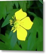 Small Sundrops Flower Metal Print