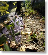 Wildflower Looker Metal Print