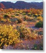 Wildflower Meadow At Joshua Tree National Park Metal Print