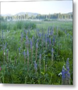 Wildflower Meadow Metal Print