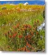 Wildflower Meadow With Indian Paintbrush Metal Print