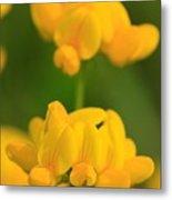 Wildflower Named Birdsfoot Trefoil Metal Print