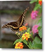 Wildflower Swallowtail Metal Print