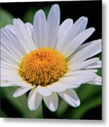 Wildflower  V9 Metal Print