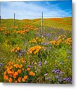 Wildflower Wonders Of The High Desert Metal Print