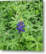 Wildflowers - All Alone And Blue Metal Print