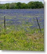 Wildflowers - Blue Horizon Metal Print