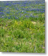 Wildflowers - Blue Horizon Three Metal Print