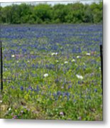 Wildflowers - Blue Horizon Too Metal Print