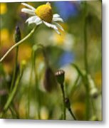 Wildflowers 1 Metal Print