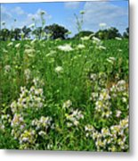 Wildflowers Along Country Road In Mchenry County Metal Print