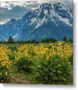 Wildflowers And Mount Moran Metal Print