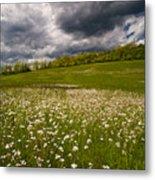 Wildflowers And Storm Clouds Metal Print