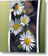 Wildflowers And Visitor Metal Print
