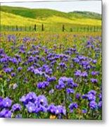Wildflowers Carrizo Plain Metal Print