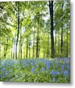 Wildflowers In A Forest Of Trees Metal Print