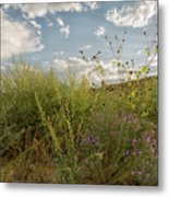 Wildflowers Of Chaco Metal Print
