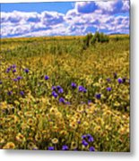 Wildflowers Of The Carrizo Plain Superbloom 2017 Metal Print