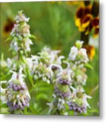 Wildflowers Three Metal Print