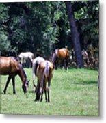 Wildhorses Of Cumberland Metal Print