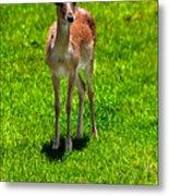 Wildlife 2 Metal Print