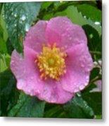 Wild's Pink Rose Metal Print