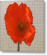 Will The Poppy In The Back Please Stand Up Metal Print