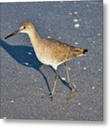 Willet And Shadow Metal Print