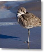 Willet Resting At The Beach Metal Print