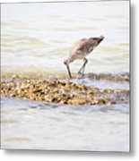 Willet Set 2 Of 4 By Darrell Hutto Metal Print