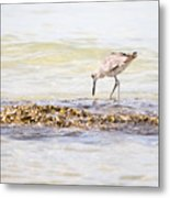 Willet Set 3 Of 4 By Darrell Hutto Metal Print