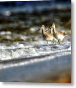 Willets In The Waves Metal Print
