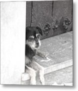 Willl She Come Back Metal Print