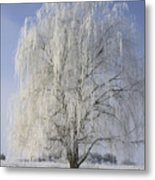 Willow In Ice Metal Print