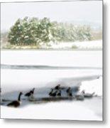 Willow Lake Geese Metal Print