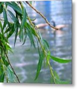 Willow Over The Water Metal Print