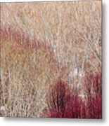 Willows In Winter Metal Print